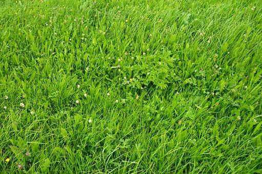 Just A Meadow, Wildflowers, Flower Meadow