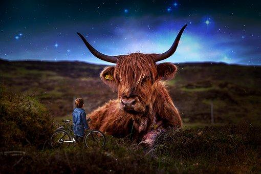 Beef, Scotland, Highland Beef, Cow, Grassland