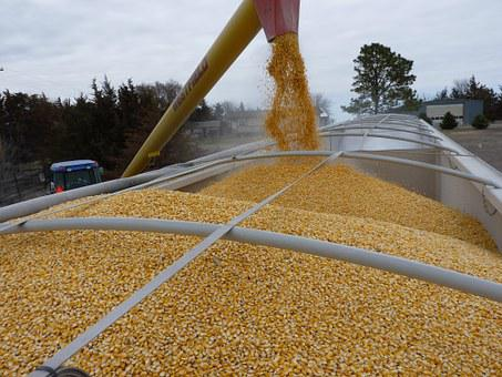 Corn, Agriculture, Loading, Truck, Vehicle