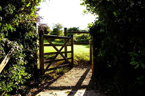 Gate, Field, Fence, Grass, Green, Meadow, Lawn, Nature