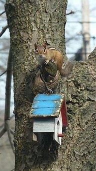 Chipmunk, Nature, Animal, Wildlife, Mammal, Tree