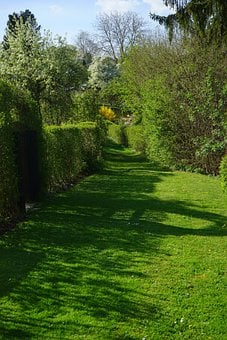 Meadow, Away, Hedge, Path, Shrubs, Spring, Spring Day