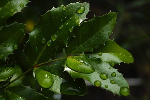 Foliage, Green, Raindrop, Just Add Water, Nature