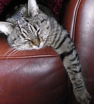Cat, Stripes, Lazy, Sleeping, Chair, Pet, Domestic