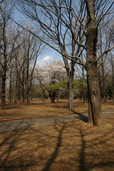 Yoyogi Park, Tokyo Metropolitan Area, Shibuya