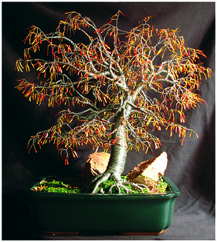 Bonsai, Tree, Sculpture, Wire, Art, Work, Nature, Sal