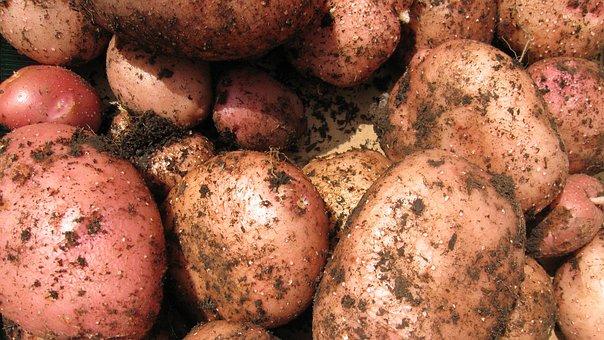 Potatoes, Vegetable, Spud, Fresh, Organic, Tuber