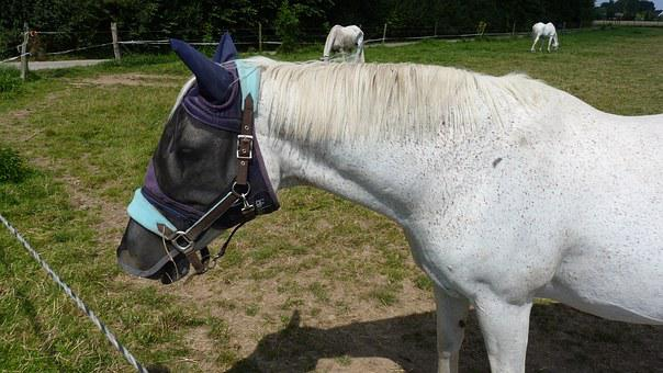 Animal, Horse, Mold, Fly Protection, Horse Head
