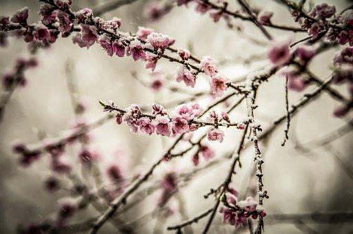 White, Beautiful, Beauty, Bloom, Blossom, Botany