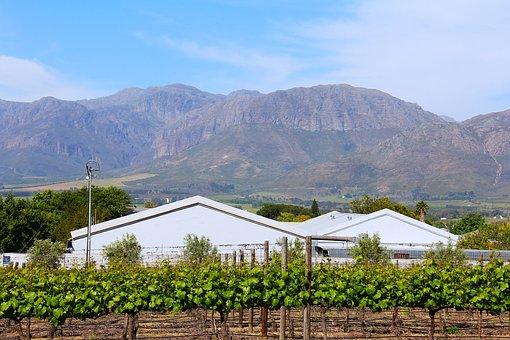 Breathtaking, Green, Greenery, Wine Tour, Wine