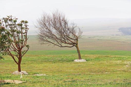 Green, Greenery, Tree, Windy, Beautiful, Breathtaking