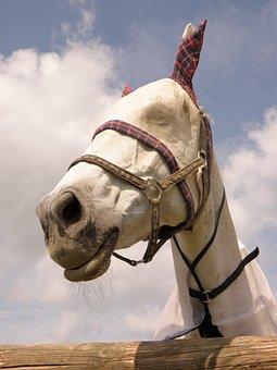 Horse, Saddle-cloth, White, Portrait, Head, Fly Mask