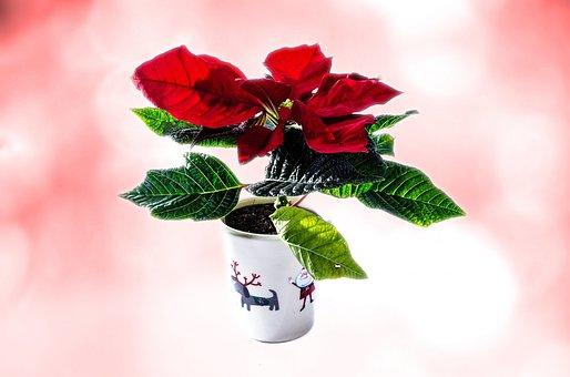 Christmas, Isolated, High Key, Isolated White