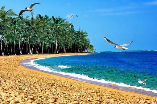 Beach, Sand, Mar, Ocean, Orla, Litoral, Coconut Trees