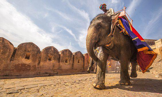 Animal, Elephant, Fort, Owner, Person, Ride, Rider