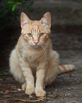 Cat, Young Cat, Pet, Cat Face, Head, Domestic Cat