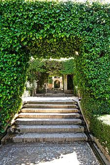 Stairs, Steps, Covered, Greenery, Outdoor, Perspective
