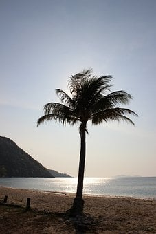 Palm Trees, Beach, Thailand, Palms, Tree, Tropical