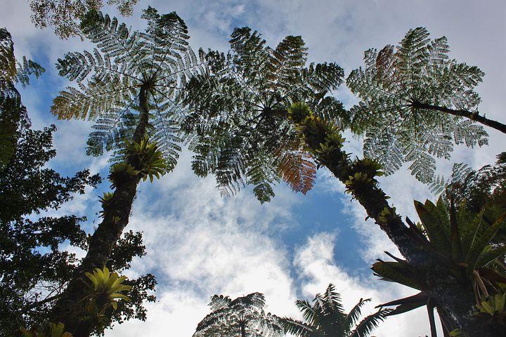 Martinique, Tree Ferns, Sky, Vegetation