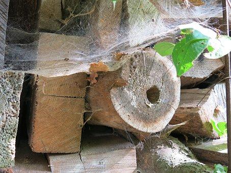 Wood, Spider Webs, Leaves, Late Summer