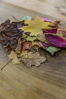 Amber, Autumn, Autumn Foliage, Autumnal, Autumnally