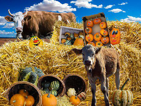 Pumpkin, Autumn, Decorative Squashes, Harvest Festival