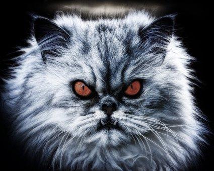 Cat, Pet, Domestic Cat, Diabolical, Devil, Evil, Fang