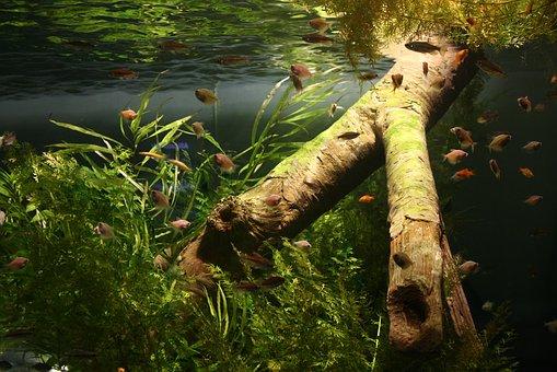 Fish, Aquarium, Dreamlike Images