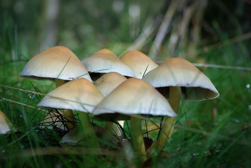 Mushrooms, Forest, Edible, Toxic, White, Grass, Autumn