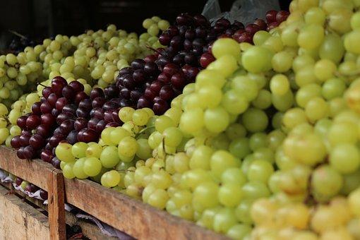 Grapes, Fruit, Agriculture, Brazilian, Caruaru, Recife