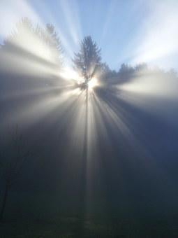 Fog, Tree, Mood, Sun, Beyond, God, Faith, Nirvana