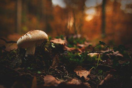 Mushroom, Forest, Autumn, Toxic, Nature, Autumn Colours