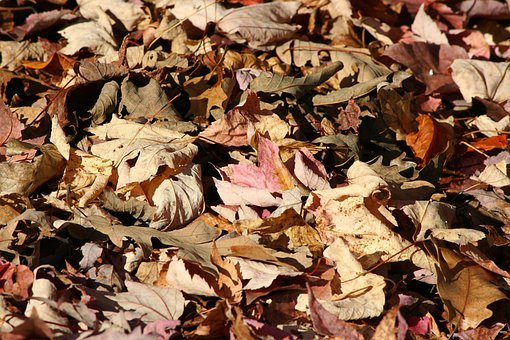 Fallen Leaves, Autumn, Forest Floor, Oak, Maple, Poplar