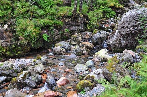 Scotland, Hidden Valley Ballachulish, Plants, Green