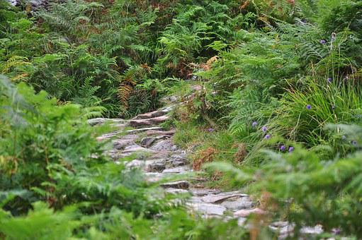 Scotland, Hidden Valley Ballachulish, Mountains, Plants