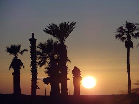 Sunset, Beach, Sea, Palms, Mexico, San Carlos
