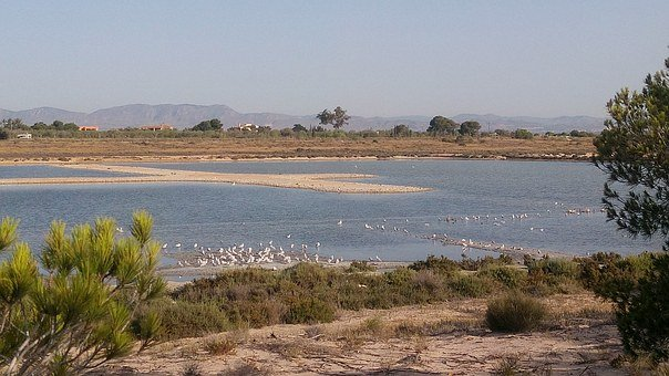 Natural Park, The Salinas, Santa Pola, Flemish, Birds
