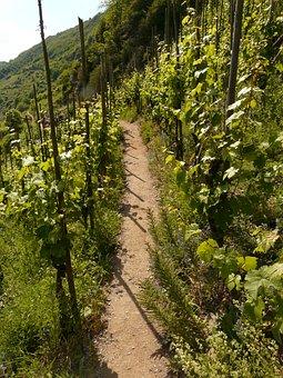 Wine, Vines, Vine, Vineyard, Wine Growing, Winegrowing