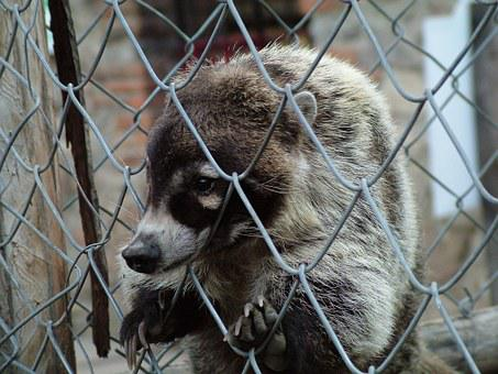 Animals, Prison, Captivity, Badger, Sadness, Nature