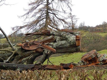 Fallen Tree, Hurricane, Damage, Bird In Tree, Secret