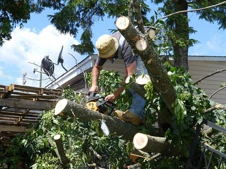 Tree, Damage, Chainsaw, Landscaping, Broken, Crushed