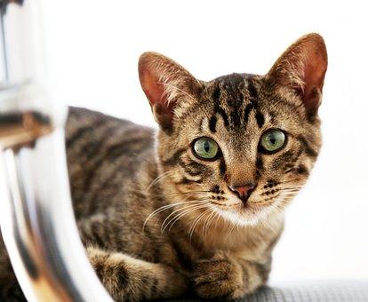 House Cat, Feline, Looking, Kitten, Pet, Feline Stopped