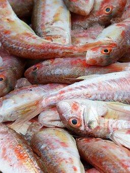 Red Mullet, Fresh Fish, Mediterranean Diet, Molls