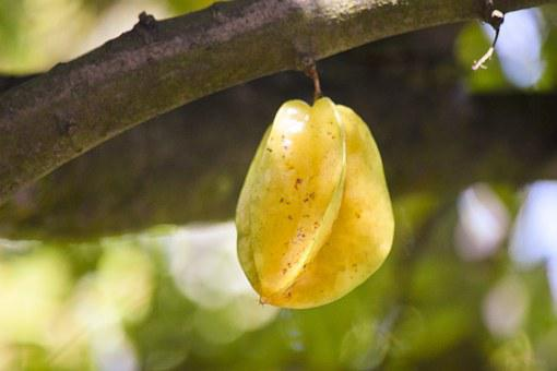 Starfruit, Plant, Fruit, Bokeh, Tree, Nature, Star