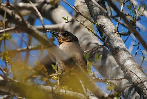Bird, Tree, Animal, Leaves, Nature, Leaf, Design, Green
