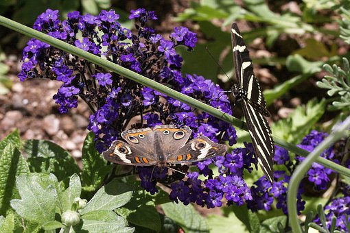 Butterflies, Insects, Macro, Nature, Design, Colorful