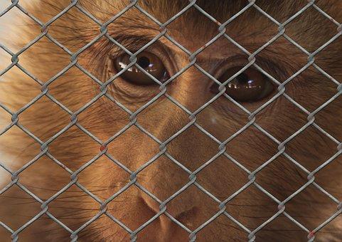 Monkey, Sad, Animal World, Fence, Wire Mesh Fence, Zoo