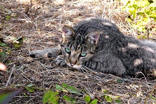 Nature, Cat, Grass, Garden, Eyes, Autumn, Lie, Rest