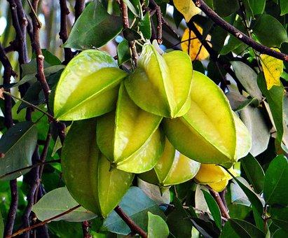 Starfruit, Averrhoa Carambola, Ripe, Carambola