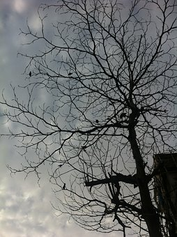 Tree, Silhouette, Branches, Branch, Forest, Woods